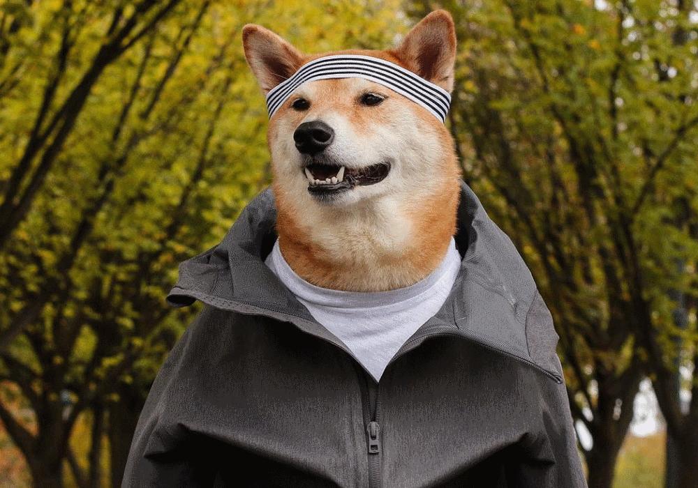 O cão que dá dicas de estilo aos homens