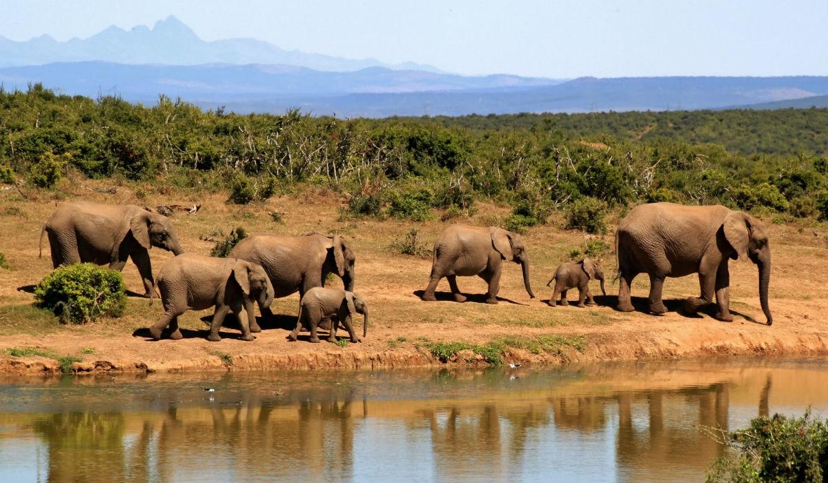 Elephant Nature Park é onde turistas e animais interagem da forma correta