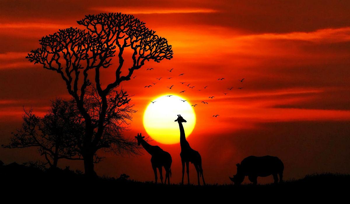 Como fazer um safari sem gastar muito dinheiro