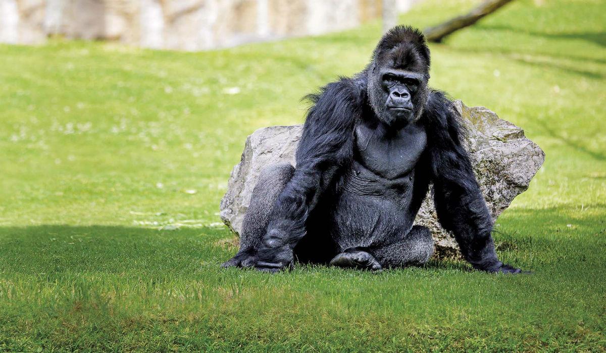 Jardim Zoológico de Lisboa: entre no reino animal e salve-o