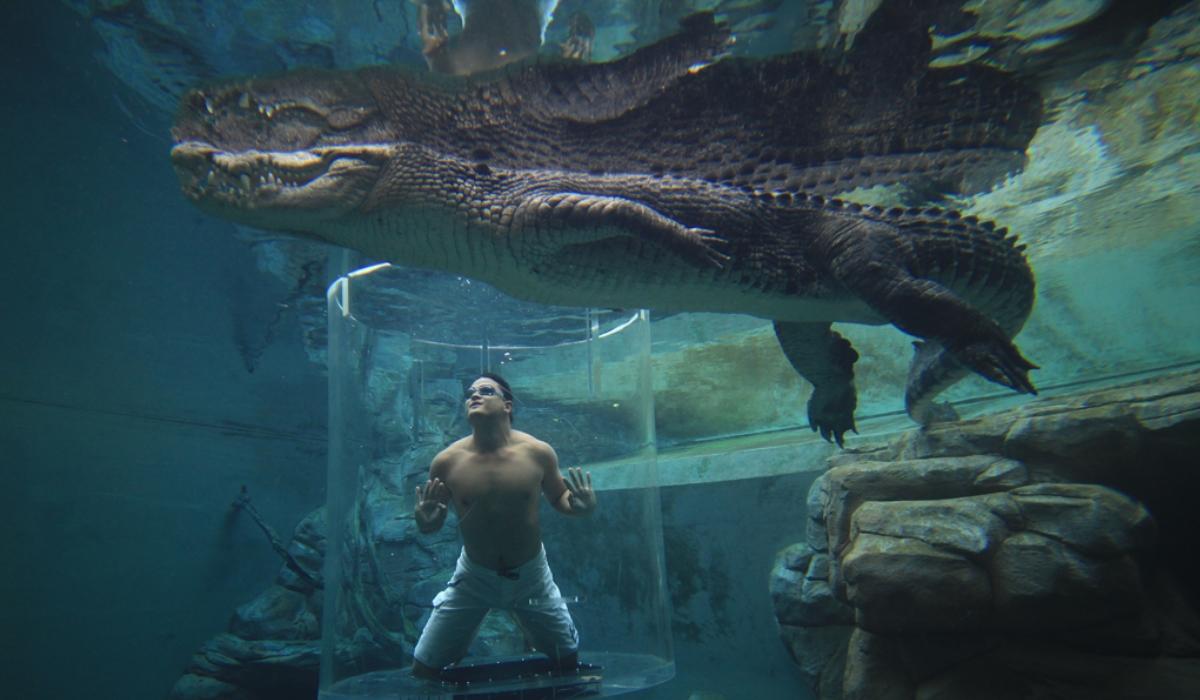 Crocosaurus Cove, o parque em que pode mergulhar com crocodilos