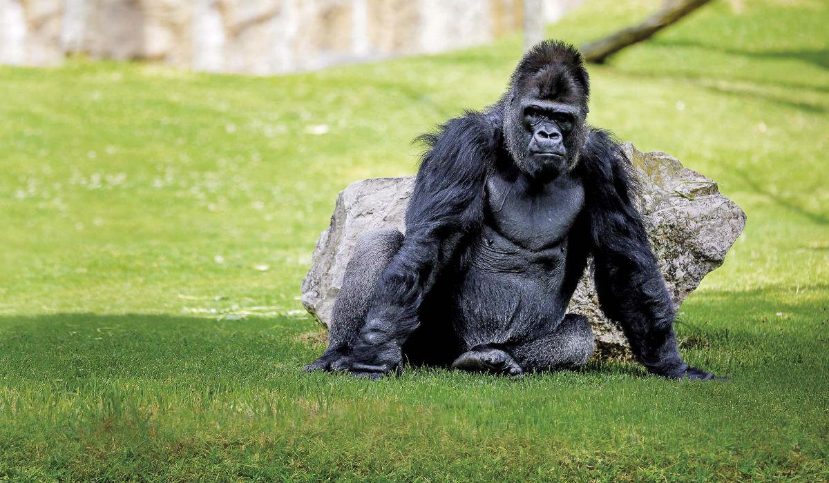 Fundo de Conservação do Jardim Zoológico: Saiba o que é e como pode ajudar