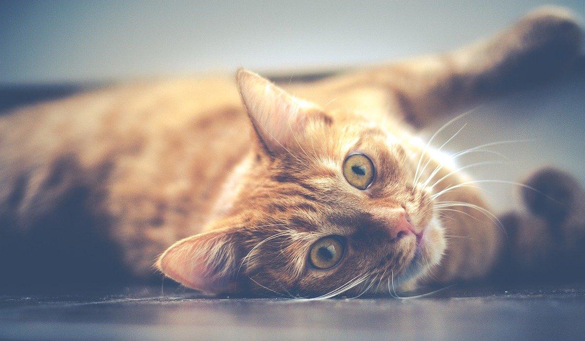 5 boas razões para ter um gato lá por casa