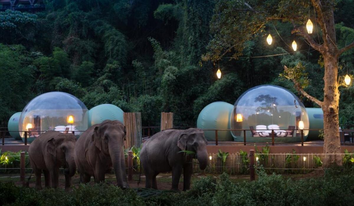 O luxo selvagem do resort onde pode dormir com elefantes