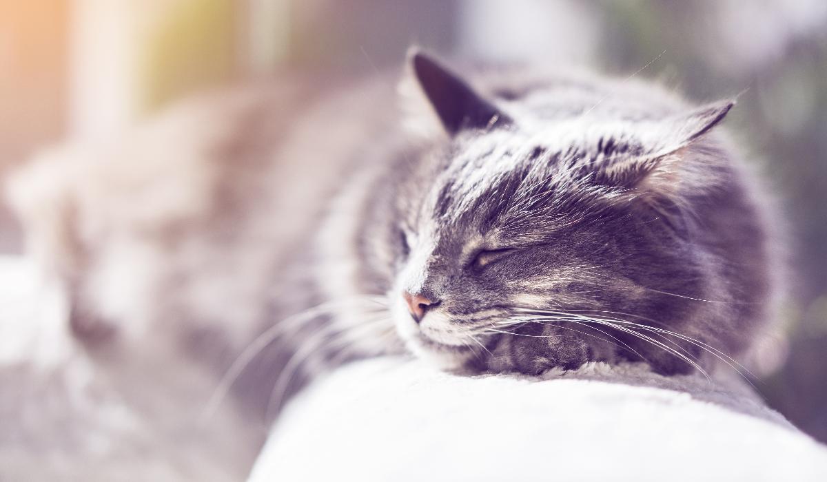 É este o motivo que leva os gatos a gostarem de dormir ao sol