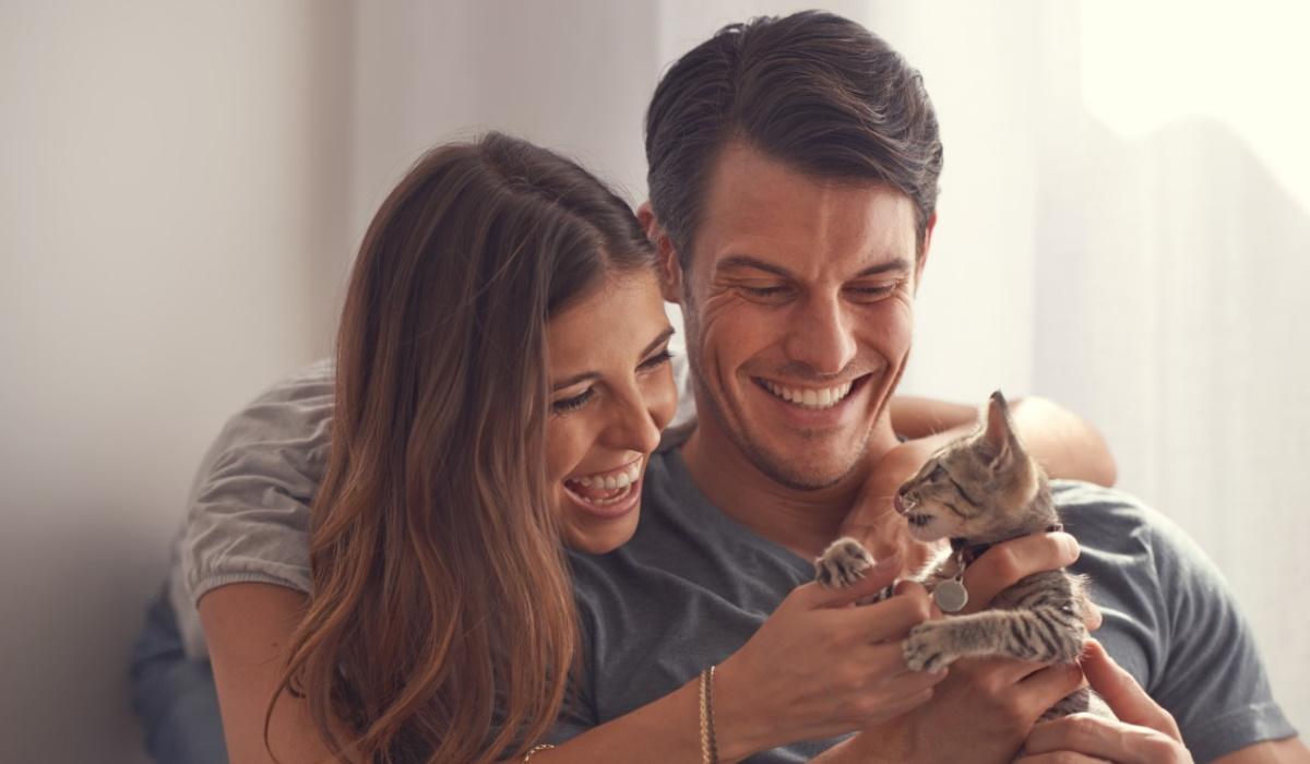 Saiba por que motivo os gatos não gostam de festas na barriga