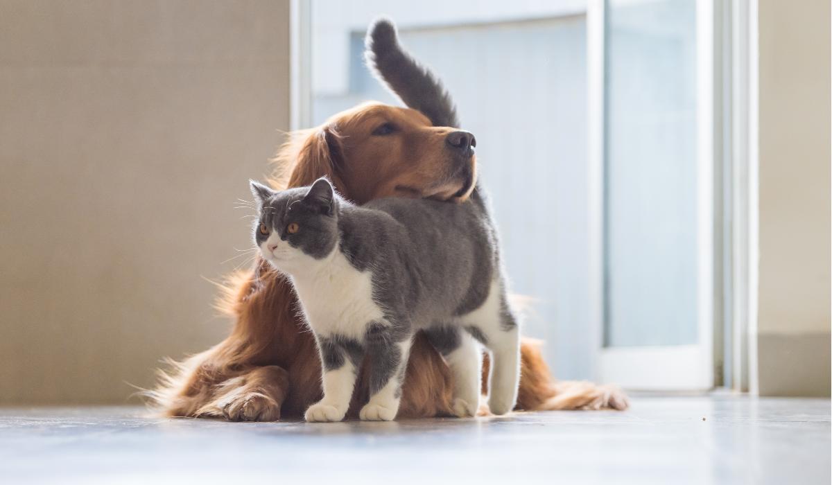 Estas são as 4 perguntas a que deve responder antes de decidir ter um animal de estimação