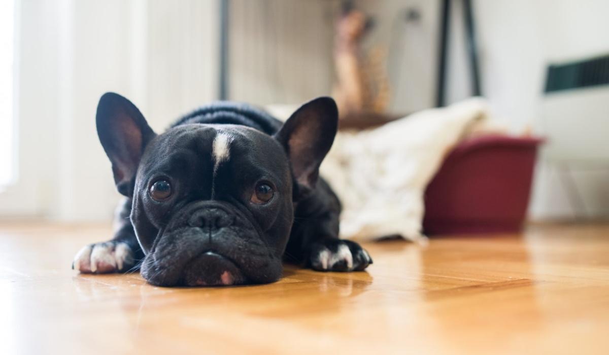 Estes três comportamentos são um pedido de ajuda do seu cão