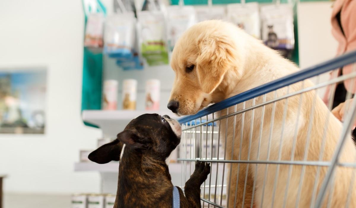 Saiba o motivo pelo qual os cães se cheiram uns aos outros