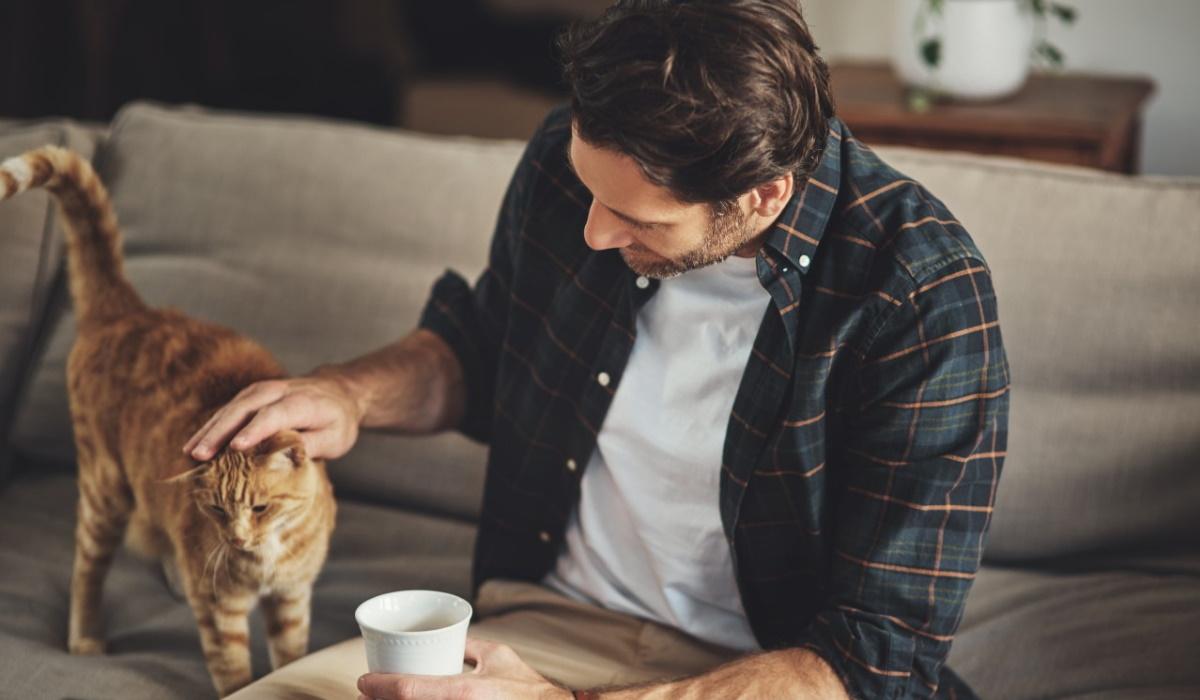 Saiba que passos dar para conquistar a confiança do seu gato