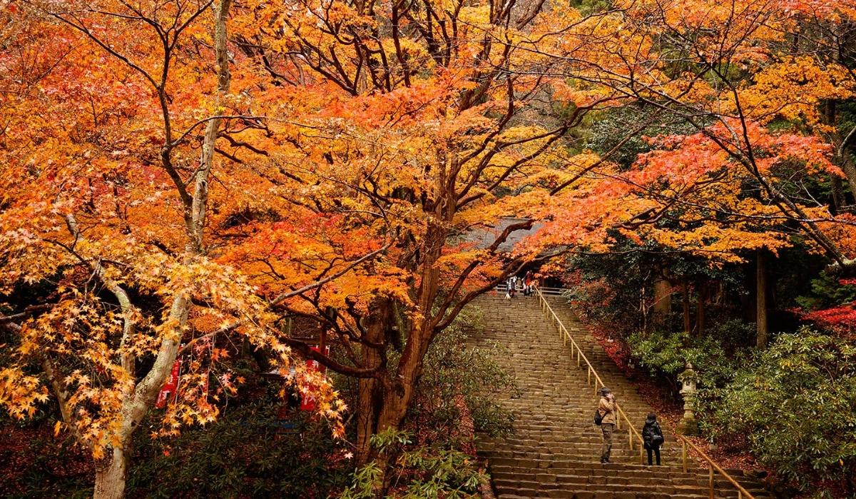 Nara Koen, o parque incrível que é um mundo