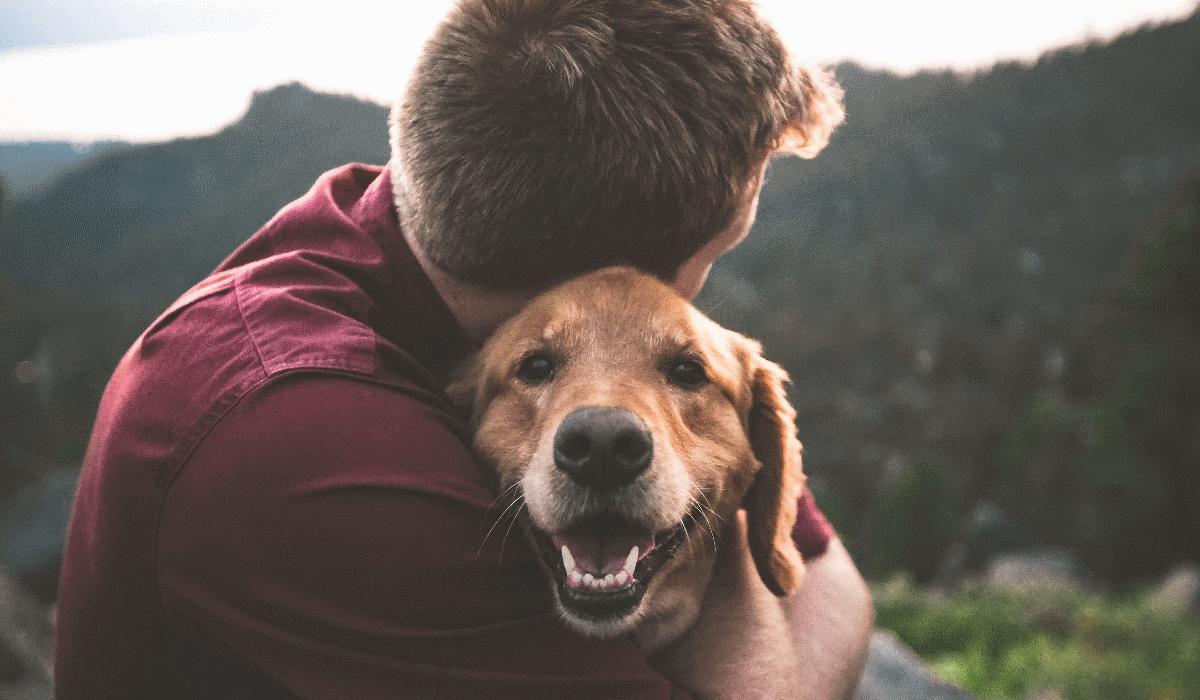 Donos de cães têm uma probabilidade muito maior de ficarem infetados com covid-19
