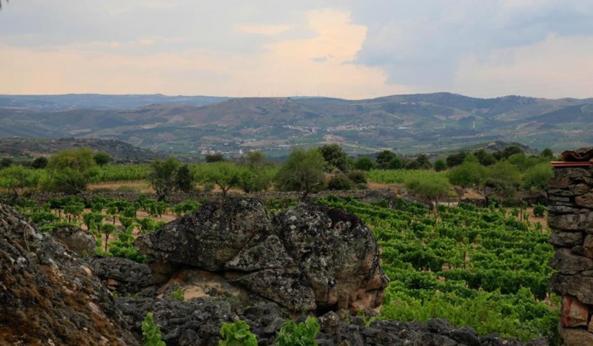 Freixo de Numão é uma aldeia de encantar no concelho de Vila Nova de Foz Côa