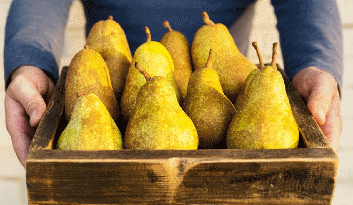 3 motivos para começar a comer peras