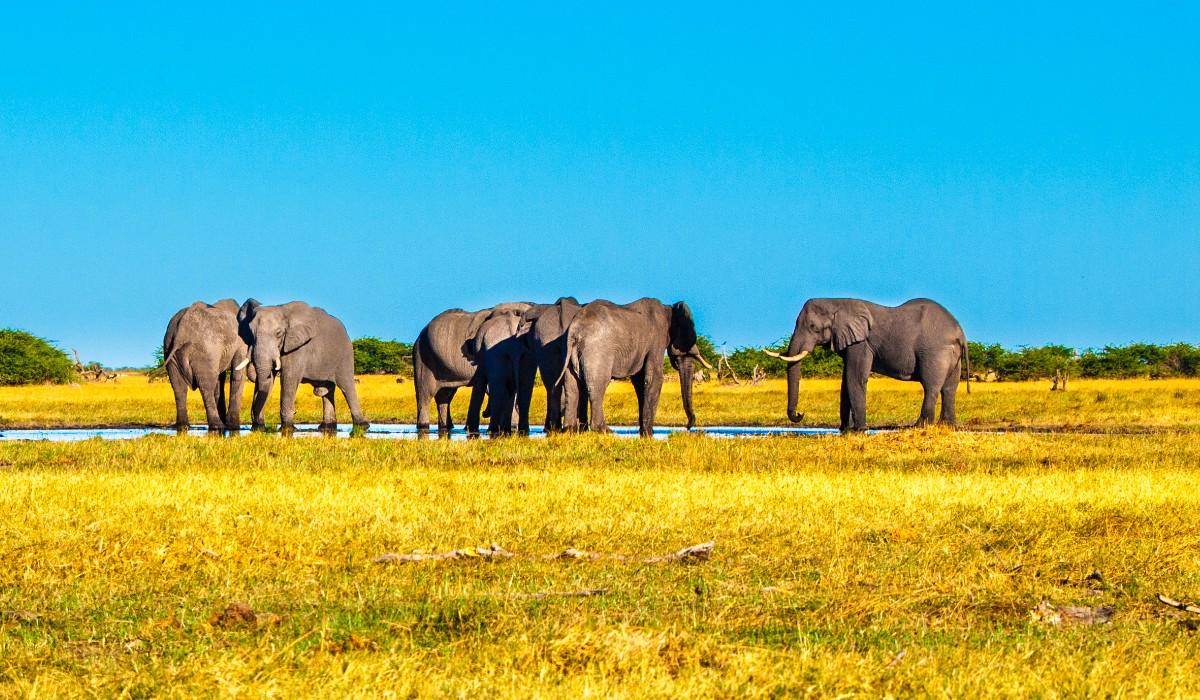 Botsuana, dos melhores safaris do mundo ao deserto interminável